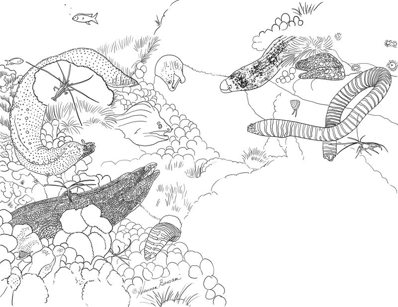 SS coloring page 2