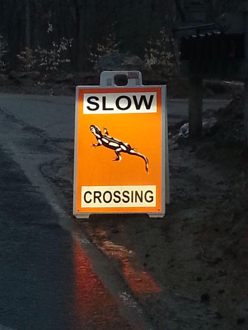 A_road_less_taken