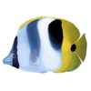 Butterfly_fish590_2